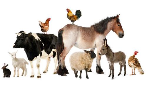 veterinary pharma franchise